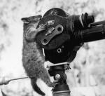 Possum on Camera