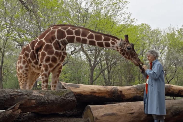 woman-giraffes-1024x543